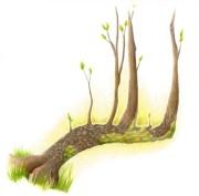 arbre fort
